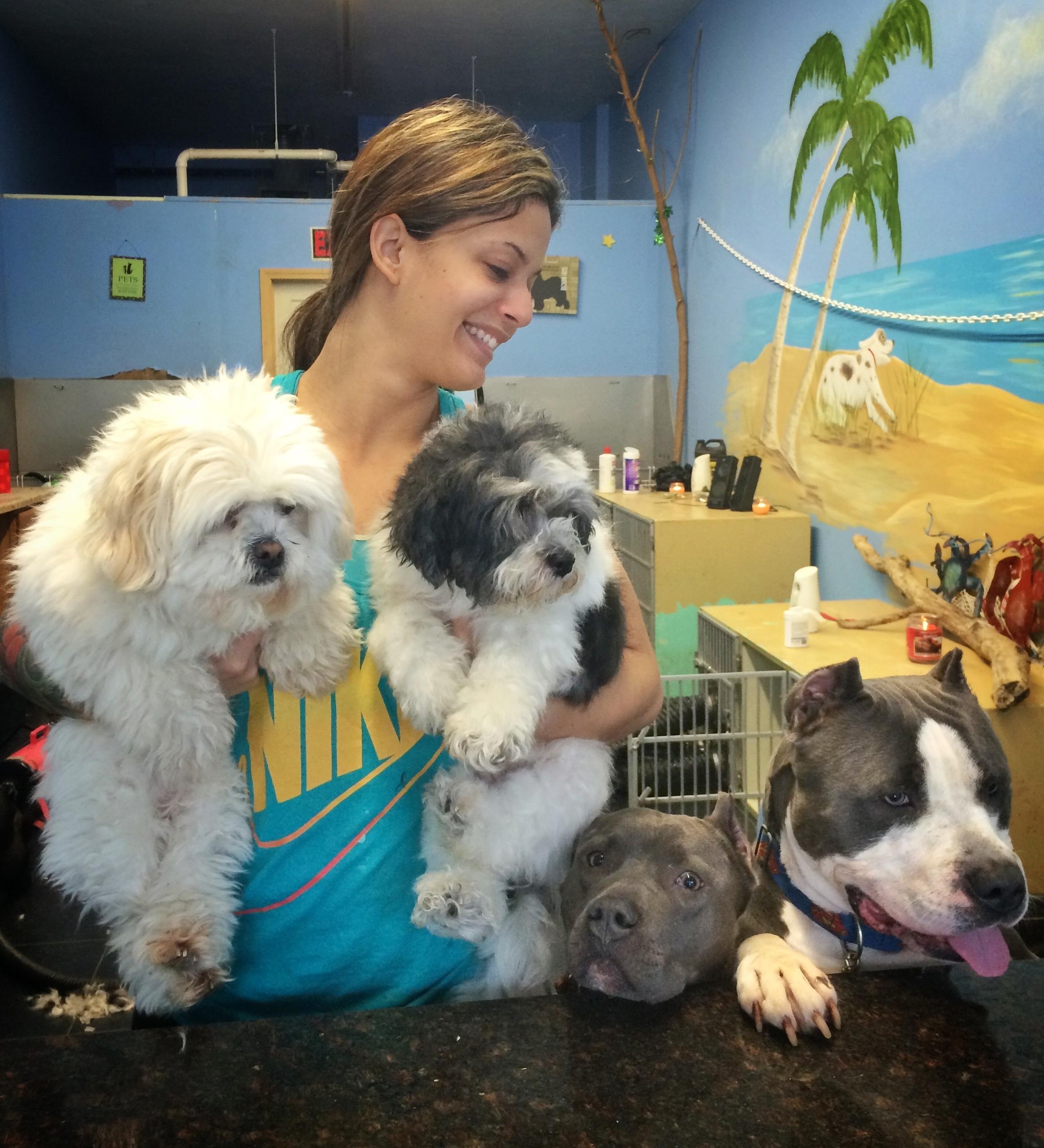 Jp Dog Groomer Pups N Paradise Jamaica Plain Dogs