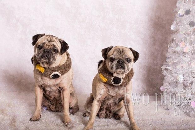 Two Pugs Studio_Muggsy & Mollie0006 copy